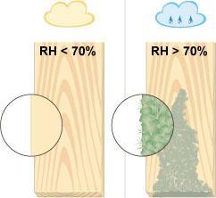 Luftentfeuchtung Schimmel Bakterien Gerüche